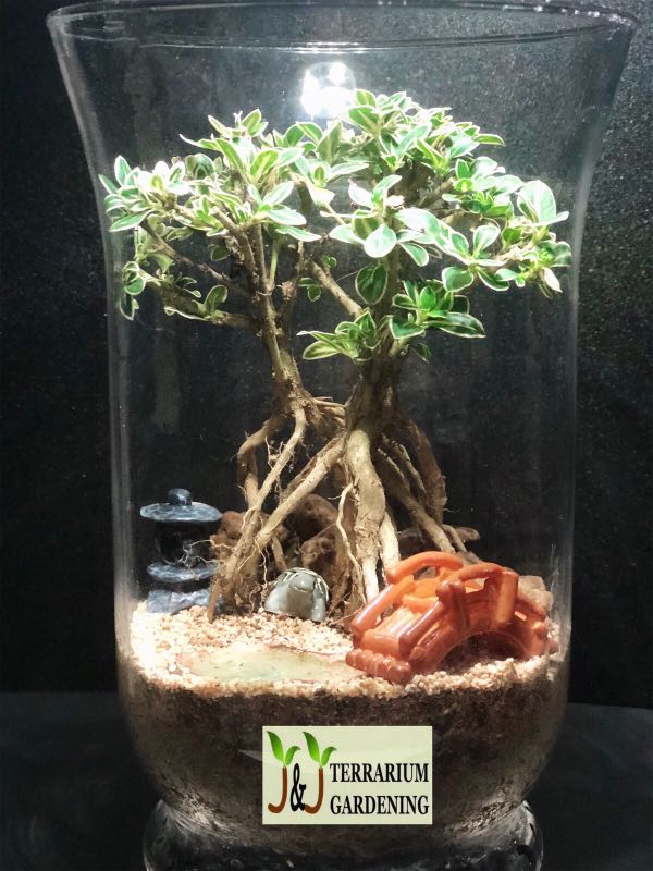 Turtle Bonsai Terrarium Gardening Plants On Carousell