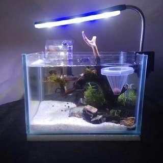 Aquarium mini art