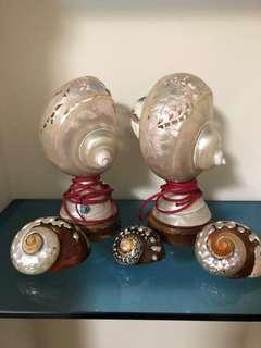 Pearl shell lights and decorative