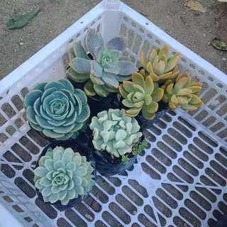 Cactus and Succulents for sale