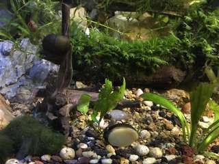 草螺snails