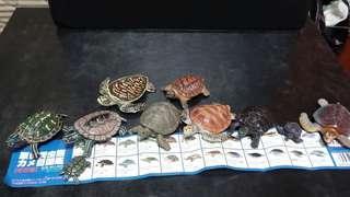 原色爬虫類 烏龜公仔 (每个50元)