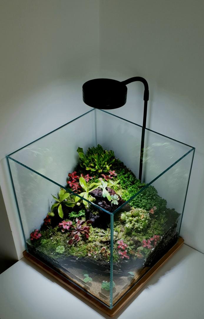 Carnivorous Plants Vivarium Full Setup Gardening Plants On Carousell