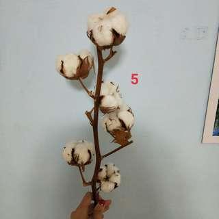 乾燥棉花 編號5