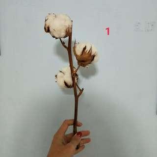 乾燥棉花 編號1