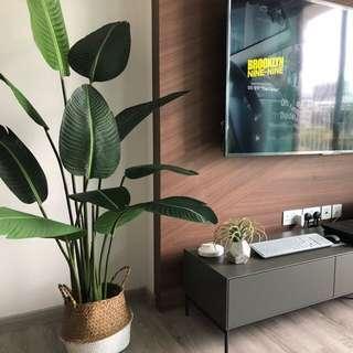Artificial Ravenala plant (155cm instock)