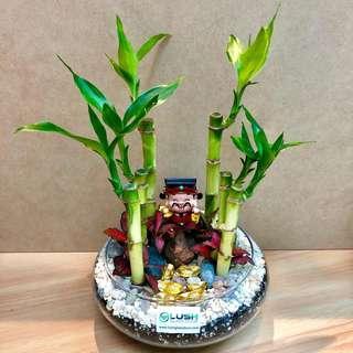 ❤️Prosperous Lucky CNY decor- Real Plant Lucky Bamboo Terrarium