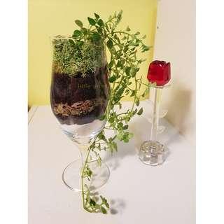 Plants Arrangement / Open Terrarium
