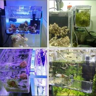 Breeder Box external hang on back guppy betta shrimp fry quarantine