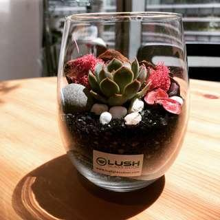 Perfect Gift for Valentine's Day/ V Day/ Valentine/ Christmas/ Xmas/ Birthday/ Congrats/ Farewell/ House warming/ Christmas/ Xmas/ Event Gifts- Real Plant Succulents/ Cactus Terrarium