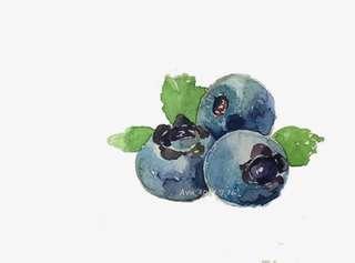 HighBush Blueberry Fruit Seeds