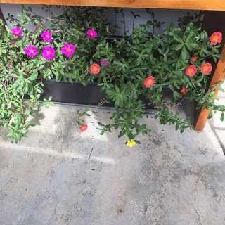 Big pot of flowering plants