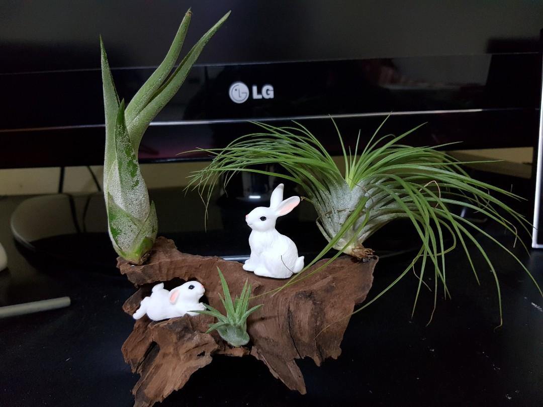 Air Plants Rabbit Driftwood Decorative Birthday Gift Gardening