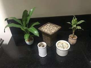 RUSH SALE!! BEAUTIFUL PLANTS AND POTS