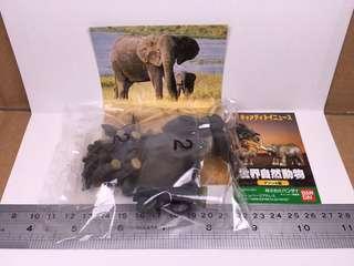 世界自然動物Africa: 象親子B