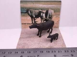 世界自然動物Asia Oceania: 水牛親子