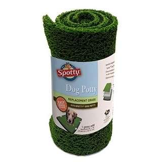 Spotty dog training replacement grass