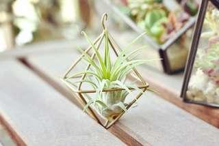 多肉植物 幾何菱型架 玫瑰金色 空氣鳳梨 吊飾 日本直送擺設 盆栽 掌心 品味