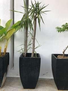 Plant 2+ vase
