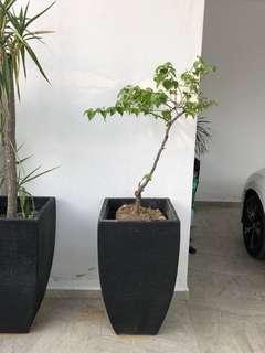 Vase + plant 1