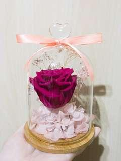 ✨紫紅色玻璃罩保鮮玫瑰花🌹