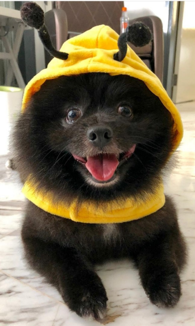 13cfd8eca88d INSTOCK Bumble bee costume - for cats and dogs
