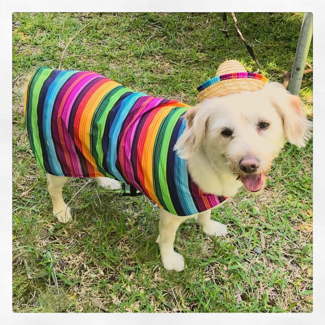 INSTOCK Dog or cat pet rainbow Mexican costume with hat