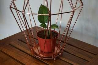 Geometric Rose Gold Plant or Candle Holder