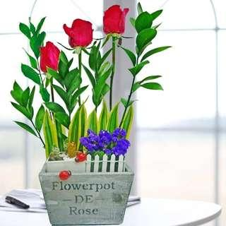 🚚 [FREE DELIVERY] 3 Mini-cactus & 3 Red Roses Table Arrangement (011-RR)