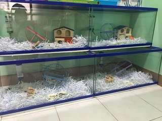 Rush Sale! Hamster tank | Fish tank