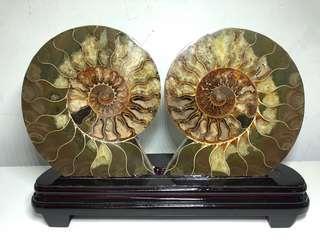 🚚 斑彩螺摆件 Vintage Ammonite Fossil Decoration fengsui display 2080g