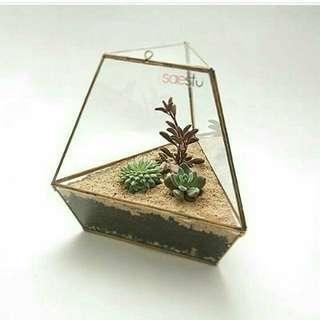 Terarium Box