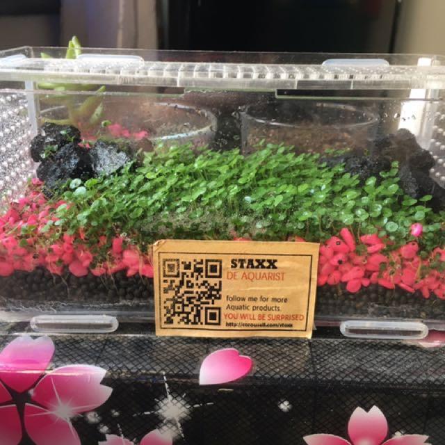 Upgraded 2 sizes aquarium / terrarium carpet grass seed