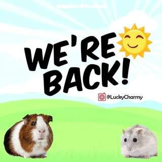 PREORDER Acrylic cage/tank for Hamsters/Guinea Pigs