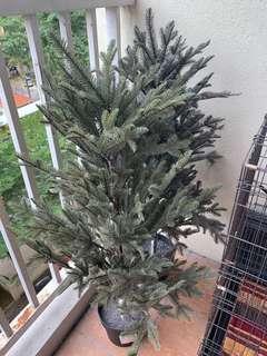 Pokok Tiruan Ikea
