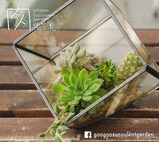 多肉植物 DIY 自組盆栽 玻璃盆 方型 幾何 寫字樓辦公室 家居擺設 開張送禮 禮物