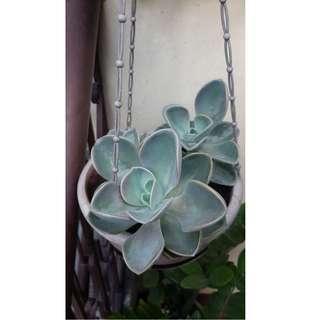 Assorted Indoor & Outdoor Plants