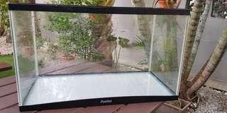 2ft Pentas Glass Tank