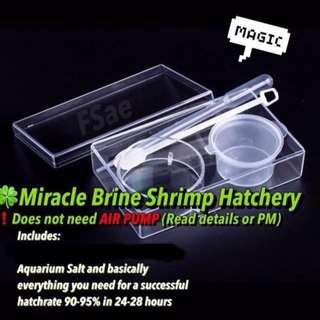 🍀 brine shrimp hatchery bbs baby sea monkey for fish fry Betta food all in one. don't need air pump read detail!