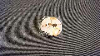 🚚 藏壽司 未來的未來 磁鐵
