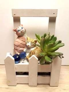 Mini Succulent Garden w Cat