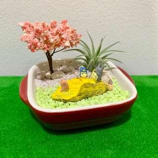 🚚 Airplant Terrarium Totoro & Friends