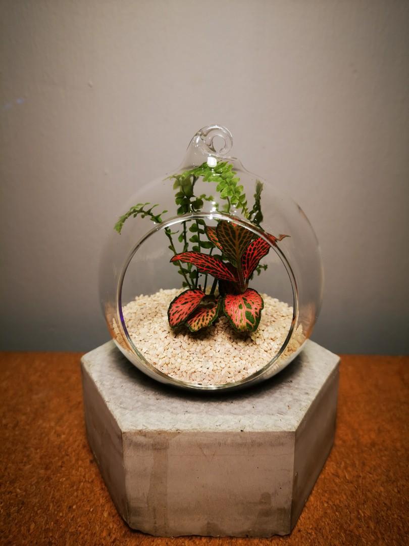 Glass Globe Terrarium Gardening Plants On Carousell