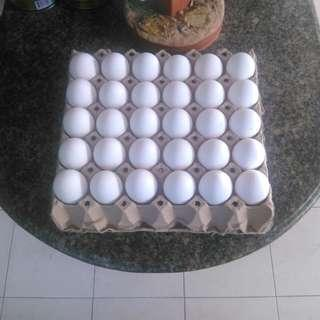 Egg Tray for sale and delivery within Cebu City