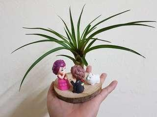 Air Plant, amazing decoration,  lover's gift.