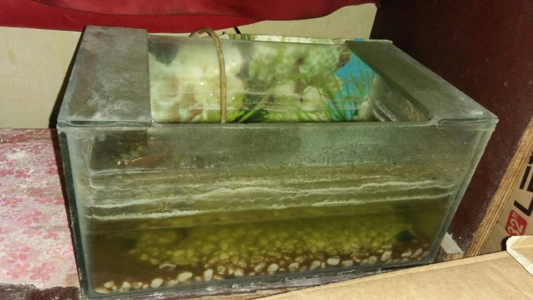 Aquarium Kecil Perabotan Rumah Di Carousell