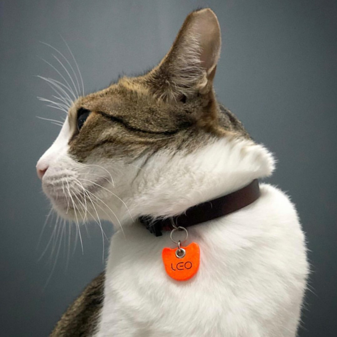 c89416c5d7ae Lava Orange Cat Tag Pet Tag Silent Noiseless Small Lightweight Soft ...
