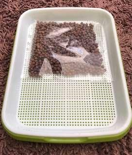 Doumiao seeds with hydroponic tray