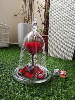 Preserved Flower in glass dome (Beauty And the beast rose)