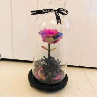 Preserved Rose in a Jar with LED light (colourful rose)